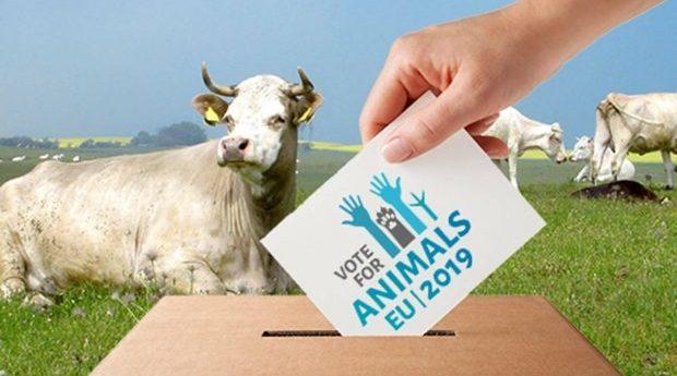 EU-valet och frågorna som gör skillnad för djuren