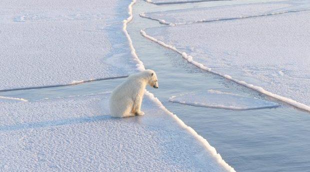 Friplanket: Dagbok från Arktis