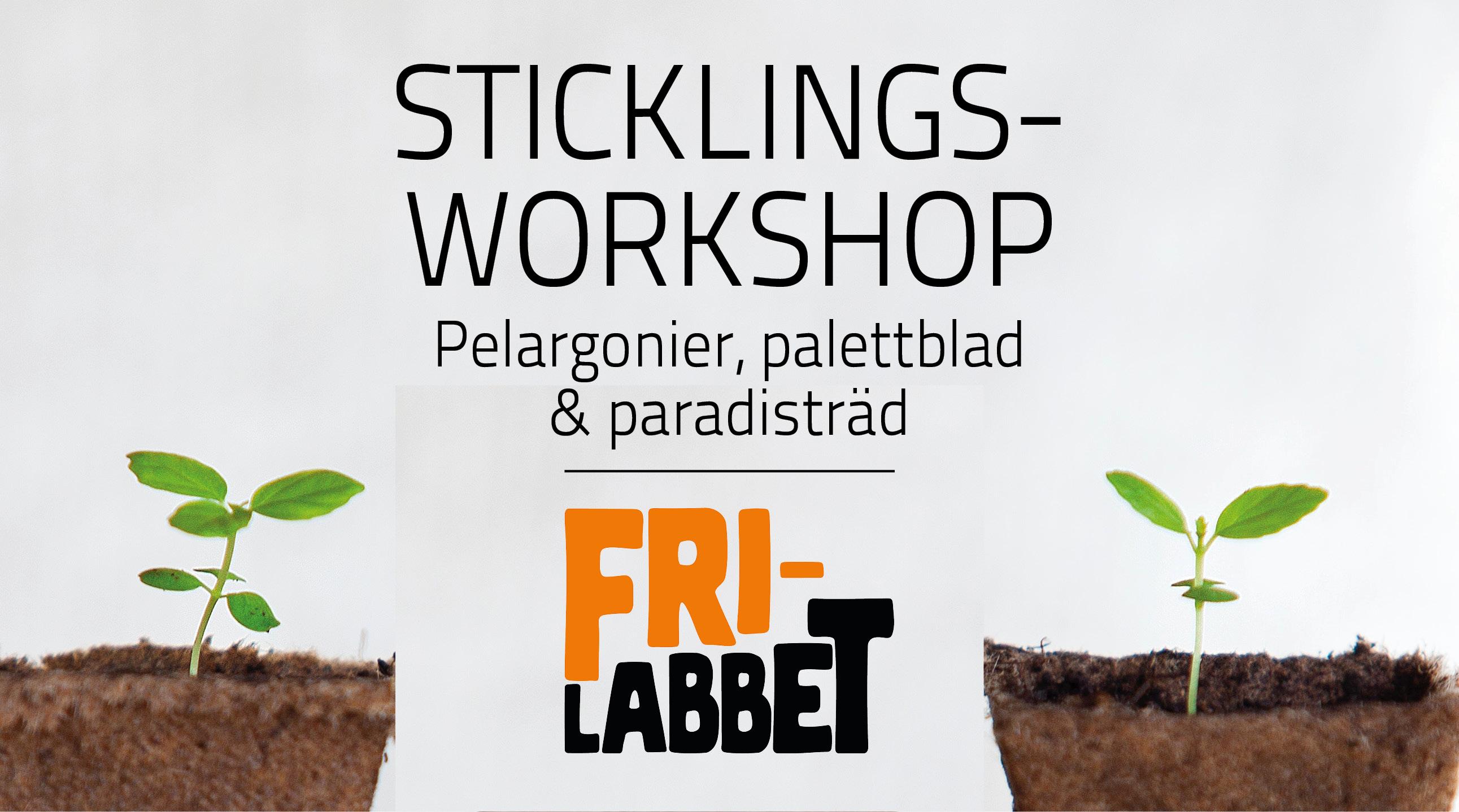 Sticklingsworkshop: Lär dig pelargonier, palettblad och paradisträd