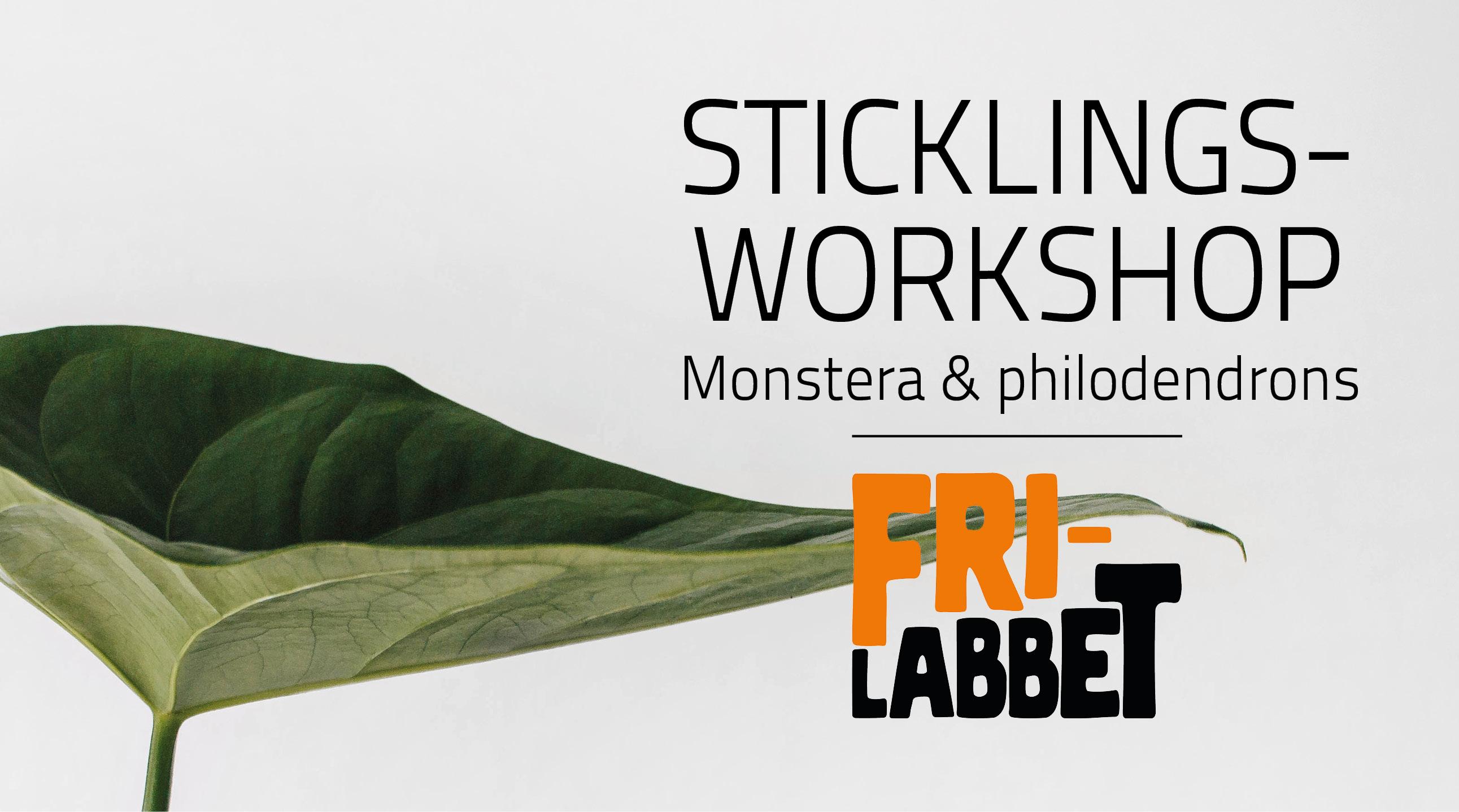 Sticklingsworkshop: Lär dig monstera och philodendrons